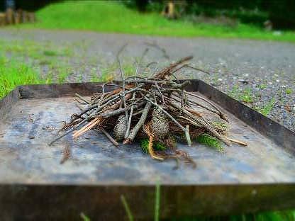 森のさんぽと焚き木ひろい